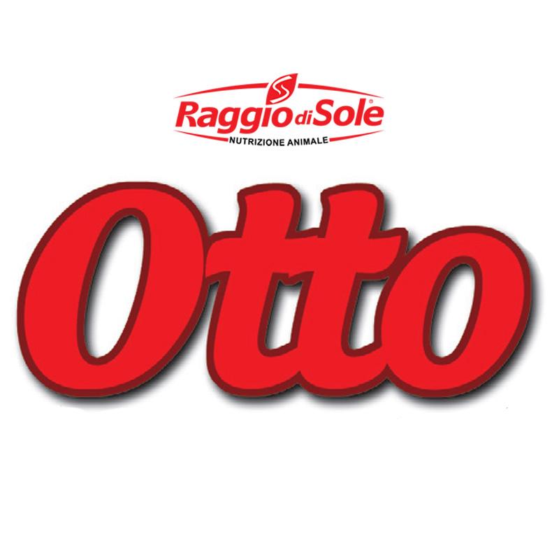 Otto 800x800